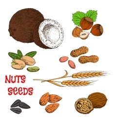 Nuts seeds beans and cereal sketch symbol vector image