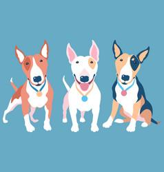 set bull terier dog vector image