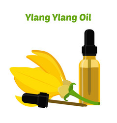 Ylang ylang cananga natural oil essential oil vector
