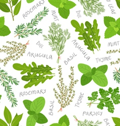 Herbs pattern on white vector image