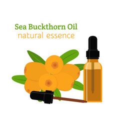 sea buckthorn natural oil essential oil vector image