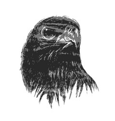 eagle drawing in art vector image vector image