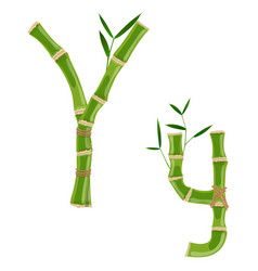 bamboo letter y vector image