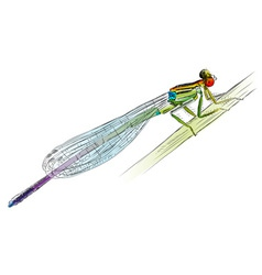 damselfly vector image