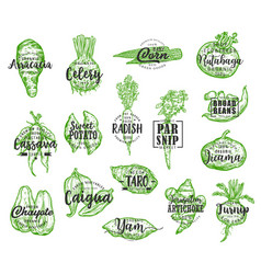Exotic vegetable silhouettes with lettering vector