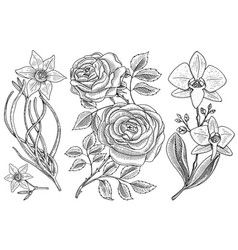 flowers set roses with leaves and buds and vector image vector image