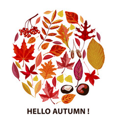 hello autumn poster with dry leaves and foliage vector image