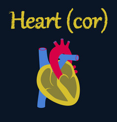 Human organ icon in flat style heart vector