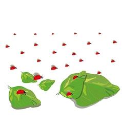 ladybugs5 vector image vector image