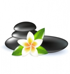 frangipani with leaves and stones vector image vector image
