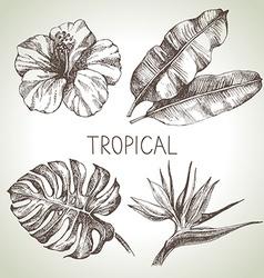 Hand drawn sketch tropical plants set vector