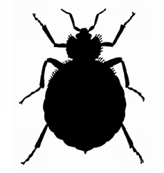 Bedbug vector