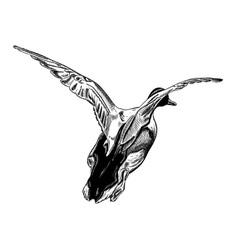 flying duck vector image vector image