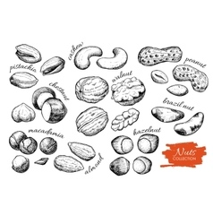 Hand drawn nuts set Engraved collection vector