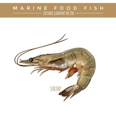 Shrimp Marine Food Fish vector
