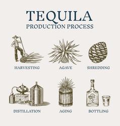 tequila production process glass bottle shot vector image