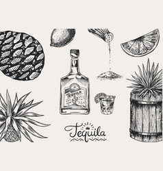 tequila background glass bottle shot with lime vector image