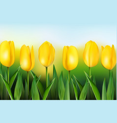 Yellow tulips on background blue sky vector
