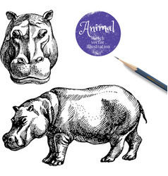 Hand drawn hippo animal Sketch isolated hip vector image