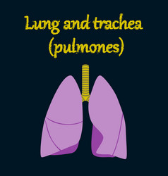 Human organ icon in flat style lungs and trachea vector
