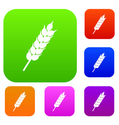dried wheat ear set color collection vector image