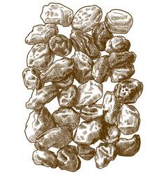 Engraving raisins vector