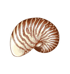 hand drawn sketch nautilus shell in color vector image