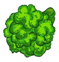 natural broccoli icon cartoon style vector image