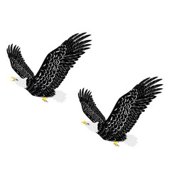 stylized bald eagle vector image