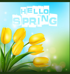 yellow tulips on background blue sky vector image vector image