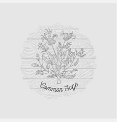 Badge with common sage bush on wooden backdrop vector