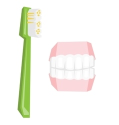 Dental jaw model and toothbrush vector image