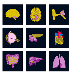 Icons set in flat style human organs vector