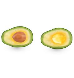 realistic avocado evergreen fruit plant single vector image