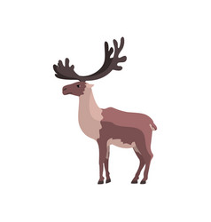 Reindeer polar arctic animal vector