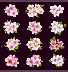 Set cherry and apple blossom sakura tree vector
