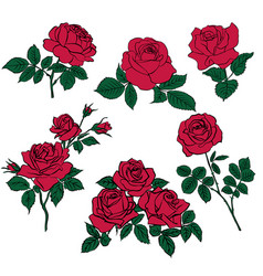 silhouettes of red roses and green leaves vector image
