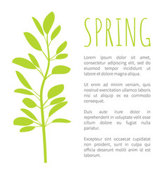 spring info poster with oval leaves on branch vector image