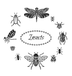 Hand drawn insect set in zentangle style Black vector image vector image