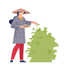 Asian female farmer in conical hat picking plant vector