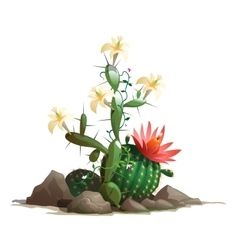 Fancy blooming cactus in soil with flowers vector