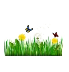 Green grass with dandelion vector