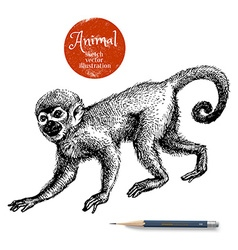 Hand drawn monkey animal Sketch isolated ma vector