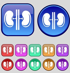 Kidneys icon sign A set of twelve vintage buttons vector image