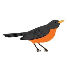 Robin bird vector