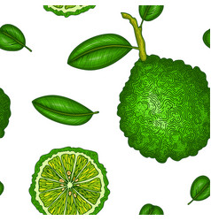 Seamless pattern with bergamot colorful wallpaper vector