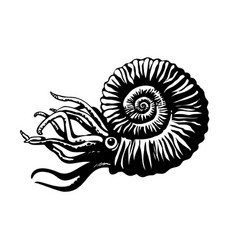 sketch of prehistoric ammonite extinct marine vector image
