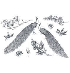 collection hand drawn sakura flowers vector image