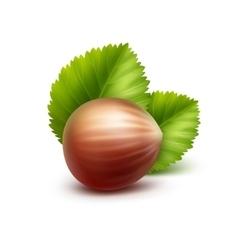 Full Unpeeled Realistic Hazelnut on Background vector image