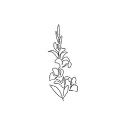 one single line drawing beauty fresh gladiolus vector image